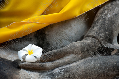 Buddha & flower 