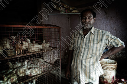 Poultry Shop, Calcutta 